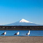 小川港魚河岸食堂 1月のお休みと開店時間について